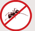 Pest Control Colchester - Ants